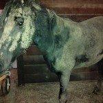 my mud horse