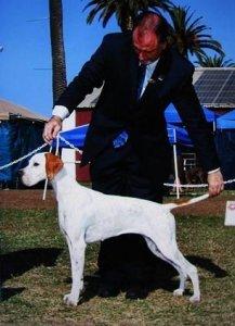 xia-dog-show